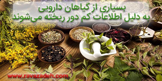 بسیاری از گیاهان دارویی به دلیل اطلاعات کم دورریخته میشوند