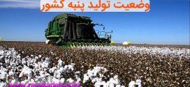 پنبه تراریخته و وضعیت تولید پنبه کشور