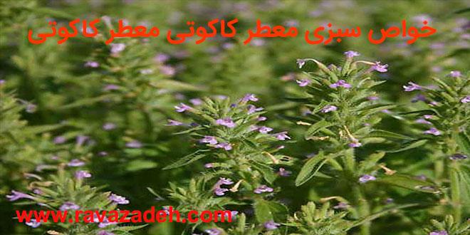 Photo of خواص سبزی معطر کاکوتی