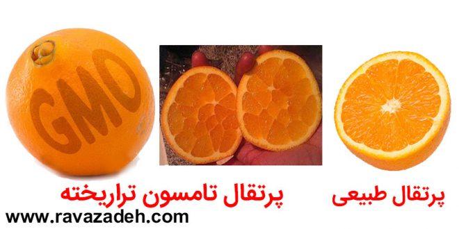 تراریخته ها را بشناسیم: تامسون؛ پرتقالی تراریخته