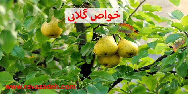 Photo of خواص گلابی