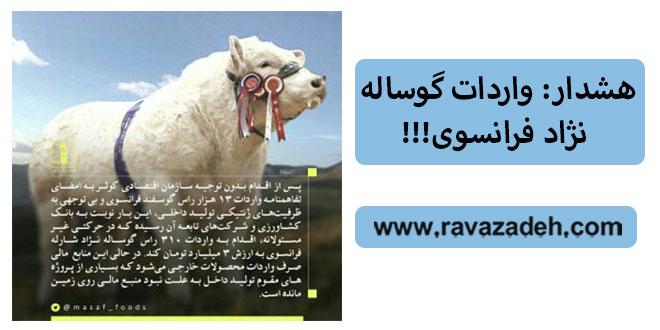 Photo of هشدار: واردات گوساله نژاد فرانسوی!!!
