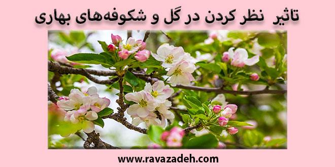 Photo of تاثیر  نظر کردن در گل و شکوفههای بهاری