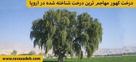 درخت کهور مهاجم ترین درخت شناخته شده در اروپا