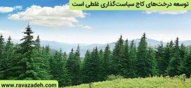 توسعه درختهای کاج سیاستگذاری غلطی است/چوب درخت کاج در صنایع کاربرد مناسبی ندارد