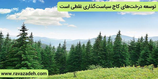 Photo of توسعه درختهای کاج سیاستگذاری غلطی است/چوب درخت کاج در صنایع کاربرد مناسبی ندارد