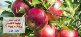 درخت سیب و کیفیت کاشتن و پرورش و پیوند آن – بخش دوم