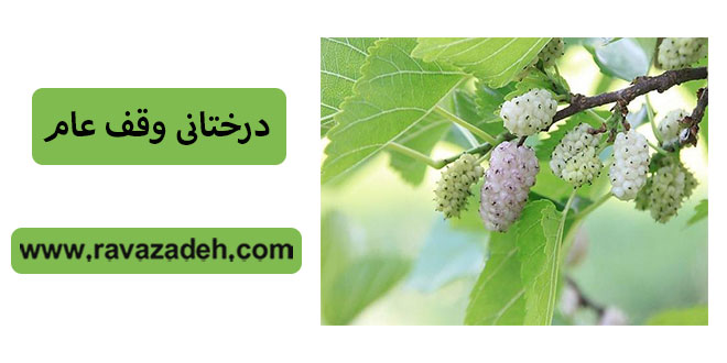 Photo of درختانی وقف عام