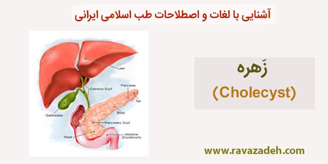 Photo of آشنایی با لغات و اصطلاحات طب اسلامی ایرانی: زَهره (Cholecyst)