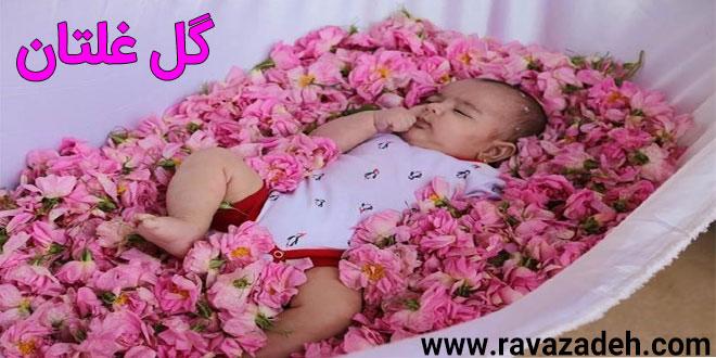 برگزاری آیین گل غلتان نوزادان