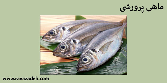 Photo of کلیپ سخنرانی حکیم دکتر روازاده: ماهی پرورشی به سبک استعماری!