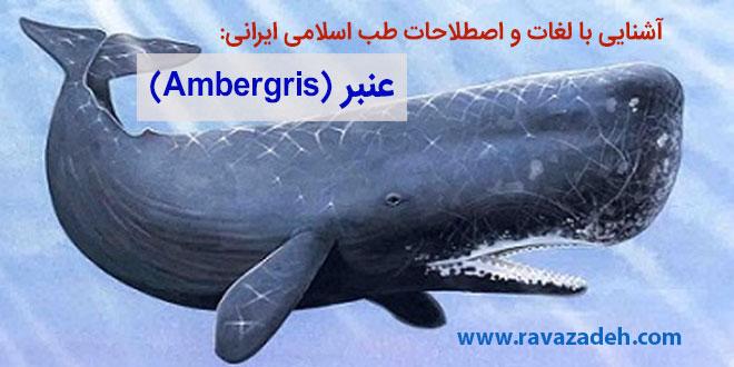 Photo of آشنایی با لغات و اصطلاحات طب اسلامی ایرانی: عنبر (Ambergris)