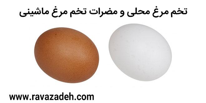 کلیپ سخنرانی حکیم دکتر روازاده: تخم مرغ محلی و مضرات تخم مرغ ماشینی