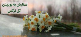سفارش به بوییدن گل نرگس