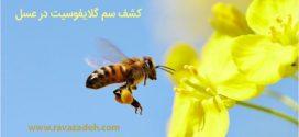 کشف سم گلایفوسیت در عسل
