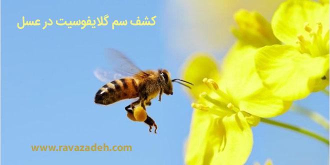 Photo of کشف سم گلایفوسیت در عسل