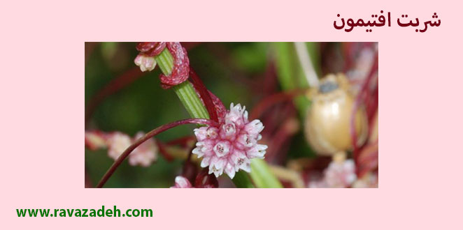 Photo of شربت افتیمون