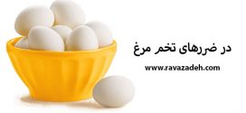 در ضررهای تخم مرغ