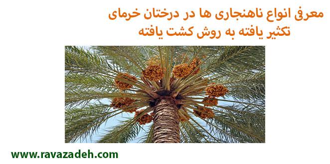 Photo of معرفی انواع ناهنجاری ها در درختان خرمای تکثیر یافته به روش کشت یافته