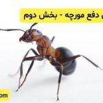 روش دفع مورچه - بخش دوم