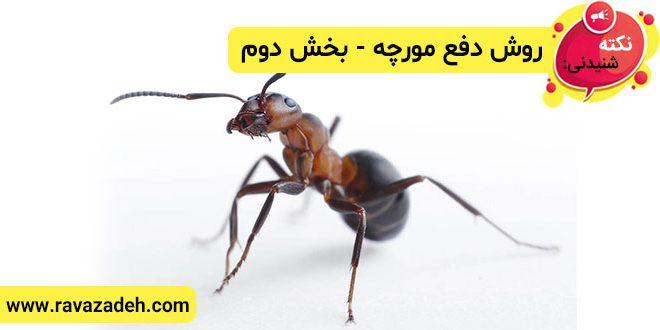 نکته های شنیدنی: روش دفع مورچه – بخش دوم