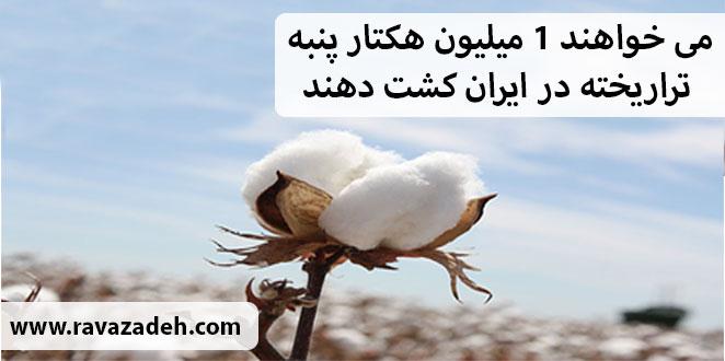 Photo of می خواهند 1 میلیون هکتار پنبه تراریخته در ایران کشت دهند