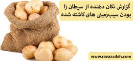 گزارش تکان دهنده از سرطان زا بودن سیبزمینی های کاشته شده