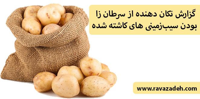 Photo of گزارش تکان دهنده از سرطان زا بودن سیبزمینی های کاشته شده