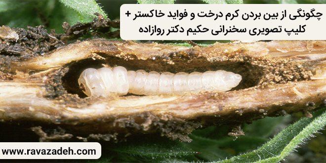 کلیپ تصویری سخنرانی حکیم دکتر روازاده: چگونگی از بین بردن کرم درخت و فواید خاکستر
