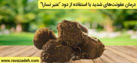 """درمان عفونتهای شدید با استفاده از دود """"عنبر نسارا"""""""