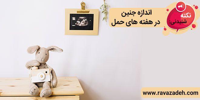 نکته های شنیدنی: اندازه جنین در هفته های حمل