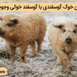 آیا دامی تحت عنوان خوک گوسفندی یا گوسفند خوکی وجود دارد؟!
