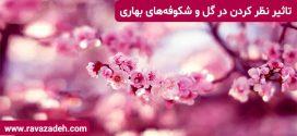 تاثیر نظر کردن در گل و شکوفههای بهاری