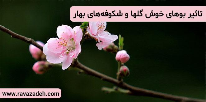 Photo of تاثیر بوهای خوش گلها و شکوفههای بهار