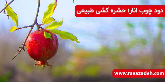 Photo of دود چوب انار؛ حشره کشی طبیعی