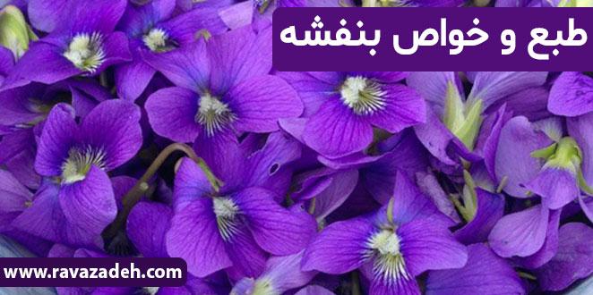 Photo of طبع و خواص بنفشه