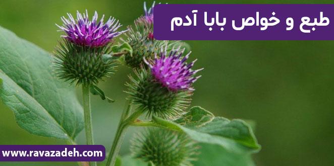 Photo of طبع و خواص بابا آدم