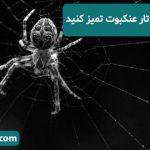 خانه هاى خود را از تار عنكبوت تميز كنيد