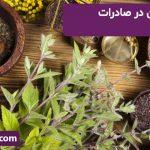 رتبه نخست ایران در صادرات ۷ گیاه دارویی