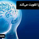 اموری که عقل را تقویت میکند
