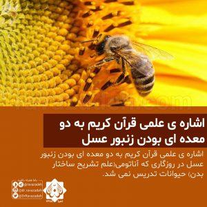 اشاره ی علمی قرآن کریم به دو معده ای بودن زنبور عسل