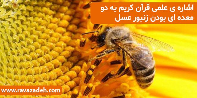 Photo of اشاره ی علمی قرآن کریم به دو معده ای بودن زنبور عسل