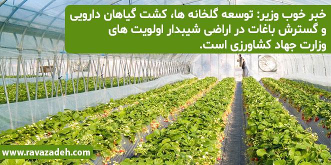 Photo of خبر خوب وزیر: توسعه گلخانه ها، کشت گیاهان دارویی و گسترش باغات در اراضی شیبدار اولویت های وزارت جهاد کشاورزی است.