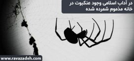 در آداب اسلامی وجود عنکبوت در خانه مذموم شمرده شده