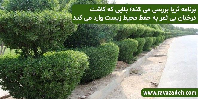 Photo of برنامه ثریا بررسی می کند؛ بلایی که کاشت درختان بی ثمر به حفظ محیط زیست وارد می کند