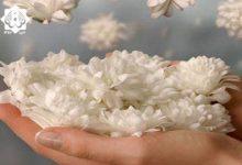 Photo of بررسی جایگاه بوی خوش و زینت در طب اسلامی