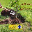 Photo of درخت کاری یک سنت الهی